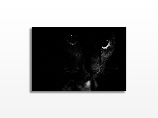 Picture of Black and White Cat Kanvas Tablo